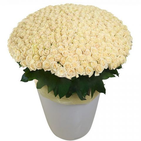 301 белая роза в большом вазоне