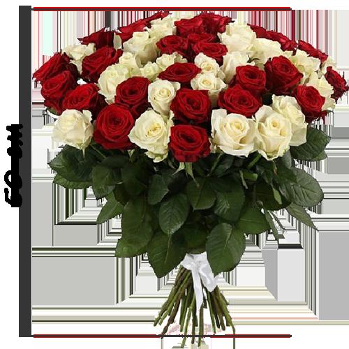 51 роза короткая