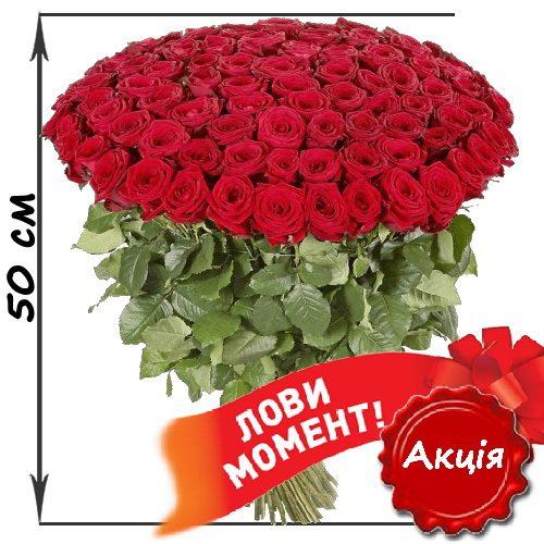 Фото товара 101 красная роза (50см) в Житомире