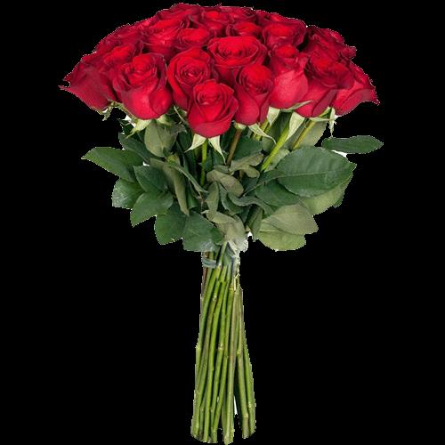 Фото товара Розы экстра класса (поштучно) в Житомире