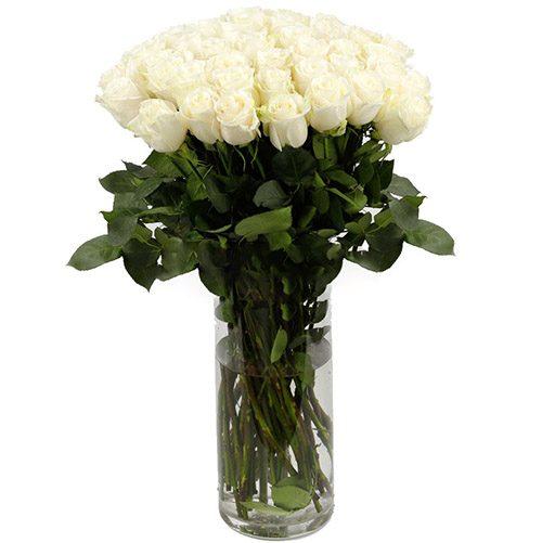 Фото товара Роза импортная белая (поштучно) в Житомире