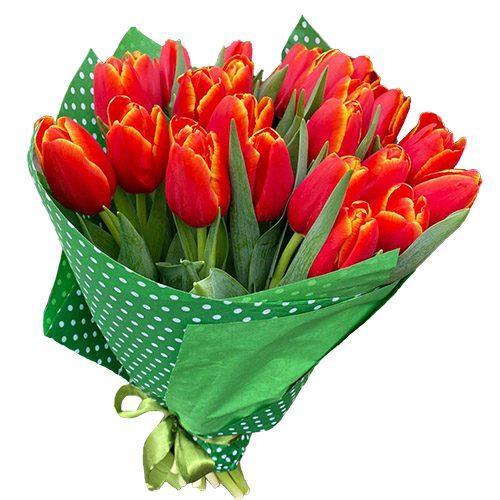 """Фото товара 21 тюльпан """"Маковый цвет"""" в Житомире"""