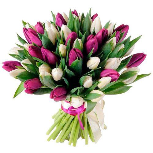 Фото товара 51 бело-пурпурный тюльпан (с лентой) в Житомире