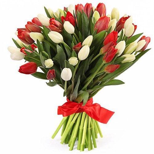 Фото товара 51 красно-белый тюльпан (с лентой) в Житомире