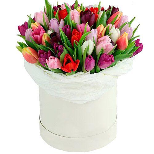 Фото товара 51 тюльпан ассорти в коробке в Житомире