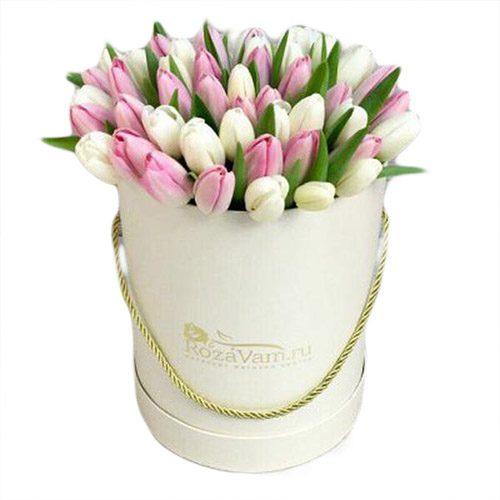 Фото товара 51 бело-розовый тюльпан в коробке в Житомире