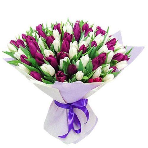 Фото товара 75 пурпурно-белых тюльпанов в Житомире