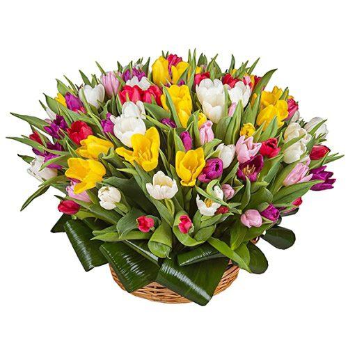 Фото товара 75 тюльпанов микс (все цвета) в корзине в Житомире