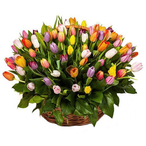 Фото товара 101 тюльпан ассорти в корзине в Житомире