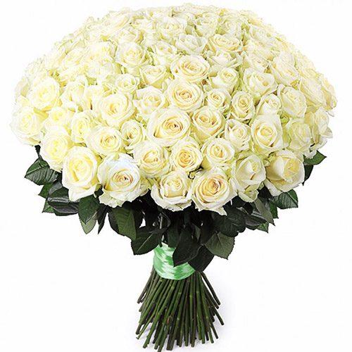 Фото товара 101 белая роза в Житомире