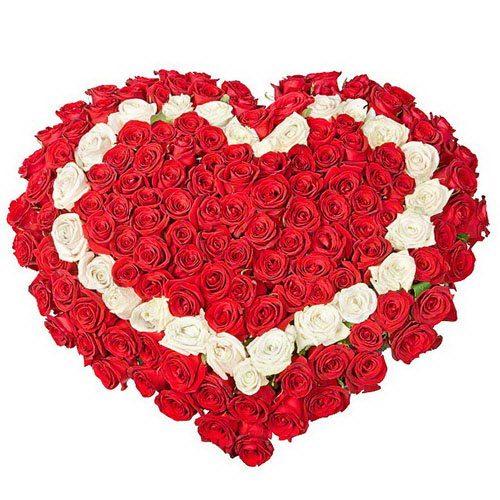 Фото товара 101 роза сердцем - красная, белая, красная в Житомире