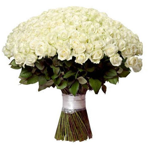 Фото товара 201 белая роза в Житомире
