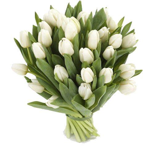 Фото товара 25 белых тюльпанов в Житомире
