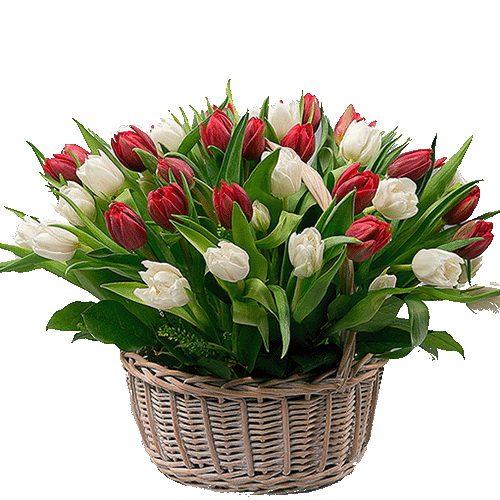Фото товара 51 тюльпан в корзине в Житомире