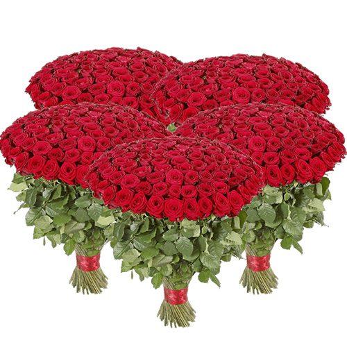 Фото товара 501 красная роза в Житомире