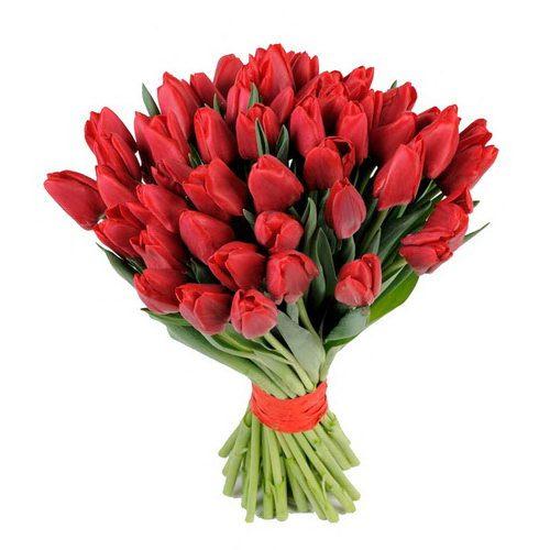 Фото товара 51 красный тюльпан в Житомире
