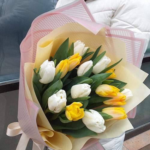 Желто-белые тюльпаны в Житомири