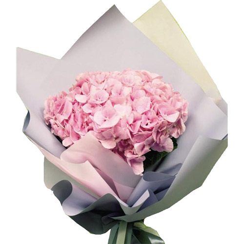 Фото товара Розовая гортензия в Житомире